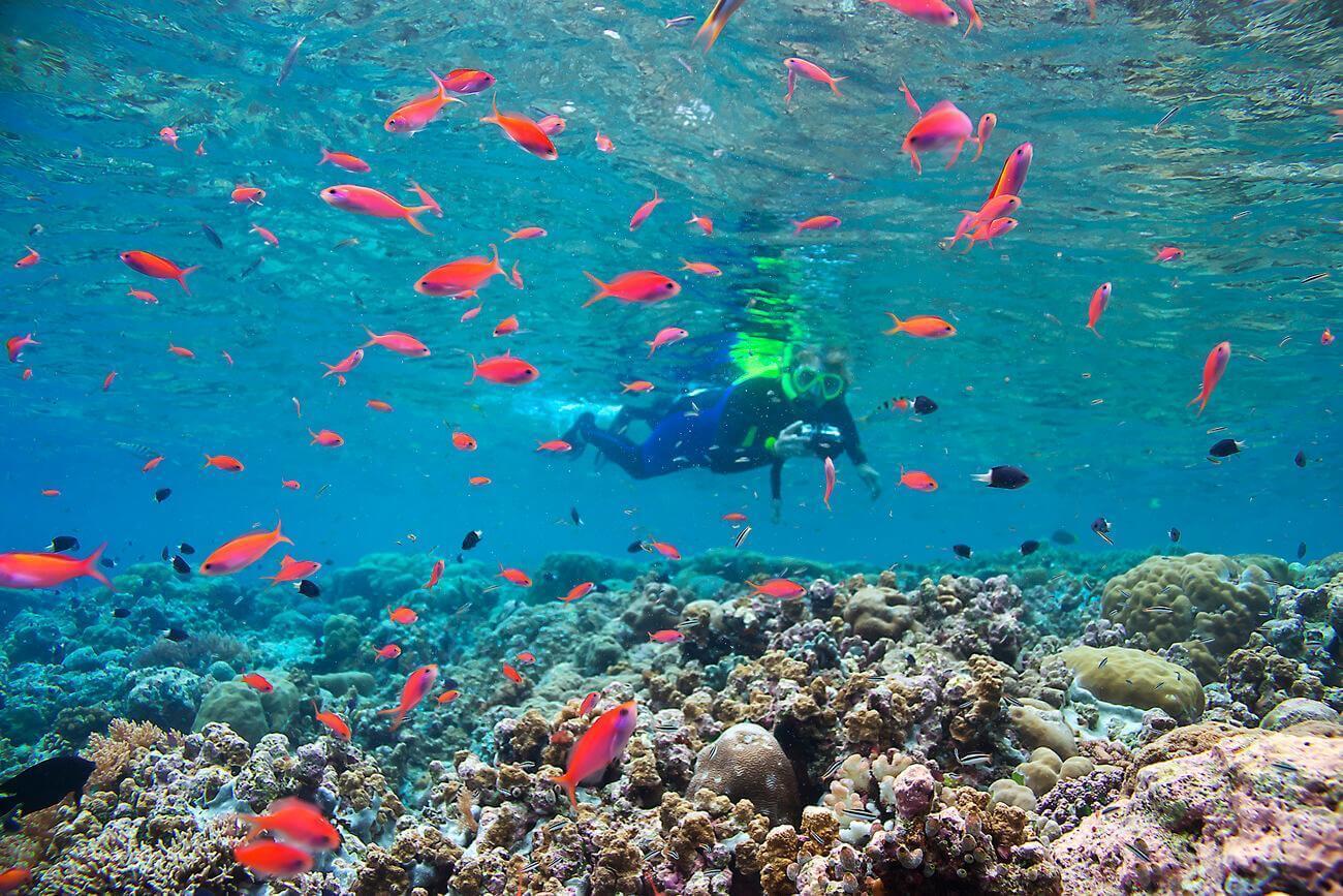 Đảo quốc Palau và những điều thú vị