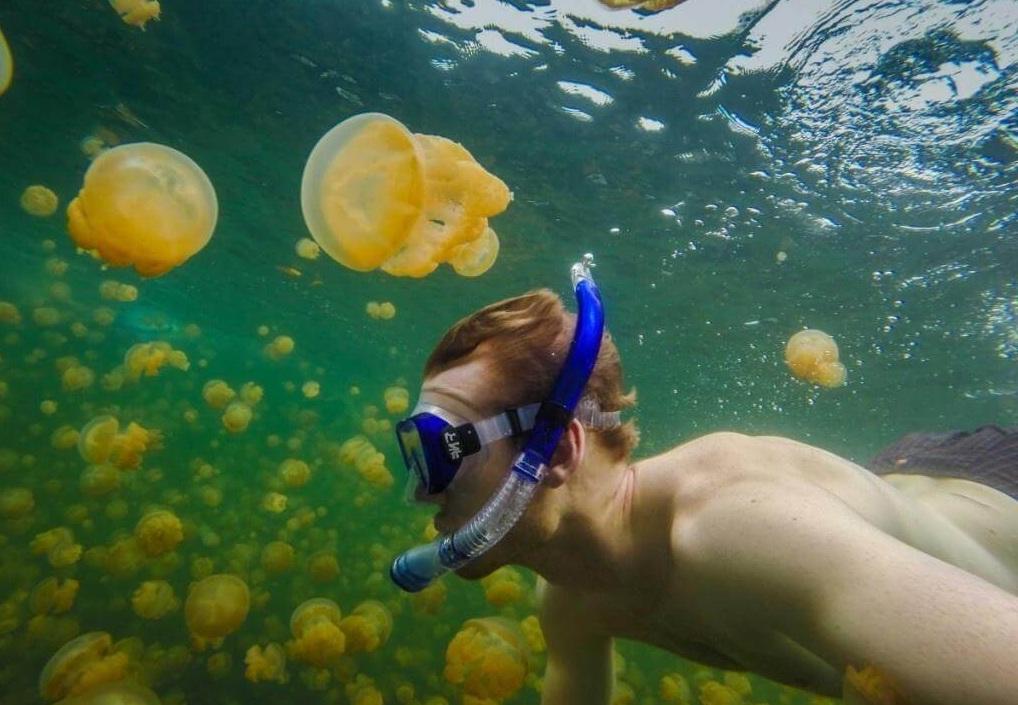 Hoạt động lặn biển là điều không thể thiếu khi đến Palau.