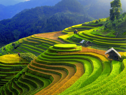 Ripe terraced rice in Mu Cang Chai